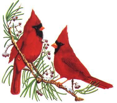 JBCs Birds Non Animated